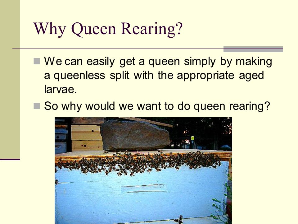 Why Queen Rearing We can easily get a queen simply by making a queenless split with the appropriate aged larvae.