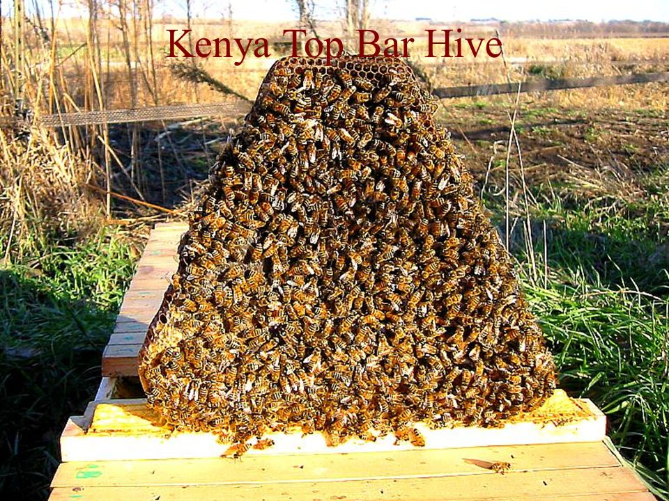 Kenya Top Bar Hive