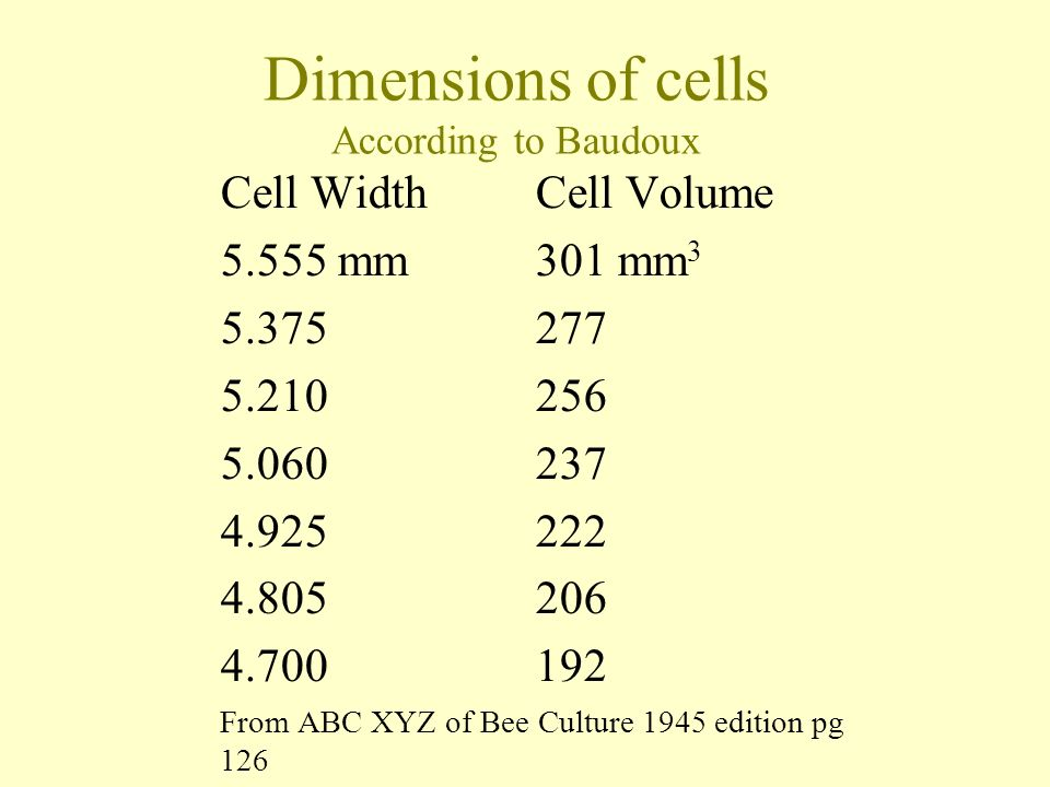 Dimensions of cells According to Baudoux