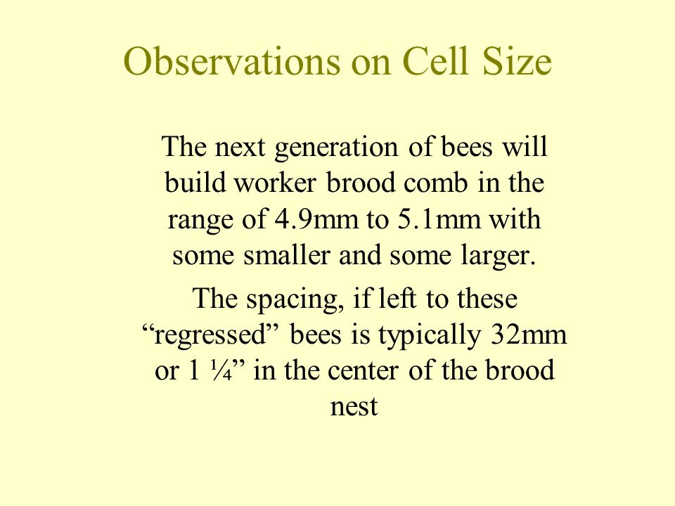Observations on Cell Size