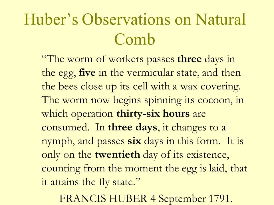 Huber's Observations on Natural Comb
