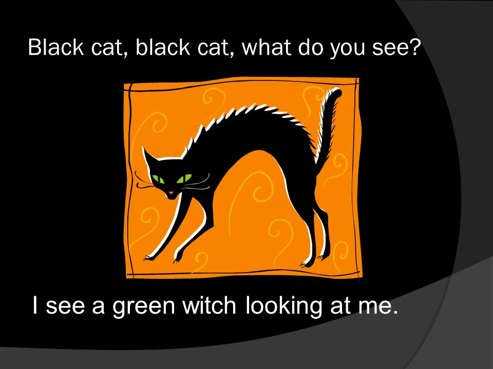 Black cat, black cat, what do you see