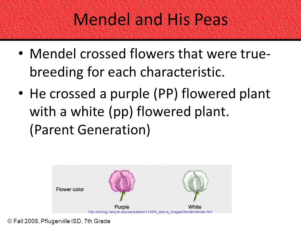 Mendel and His Peas Mendel crossed flowers that were true-breeding for each characteristic.