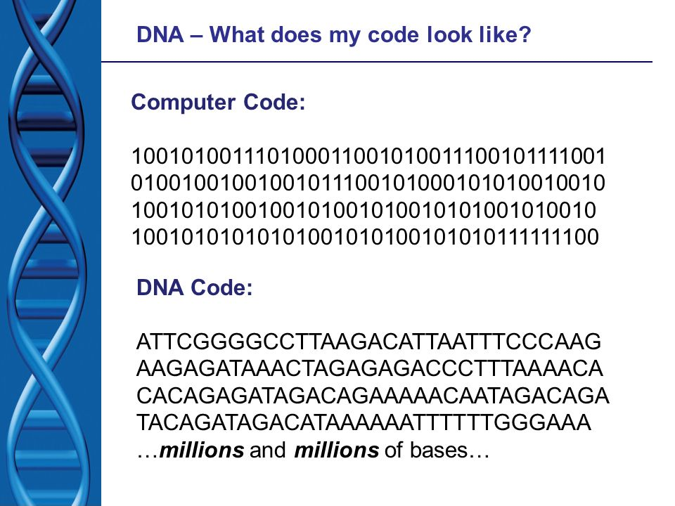 DNA – What does my code look like