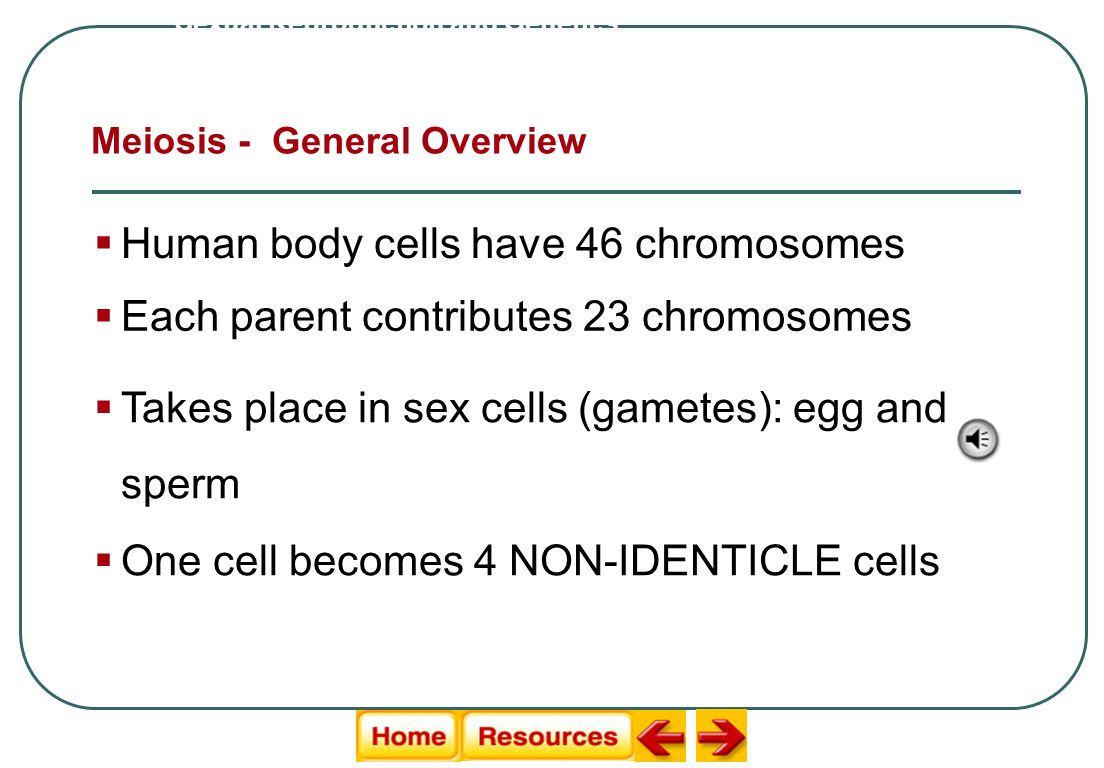 Human body cells have 46 chromosomes