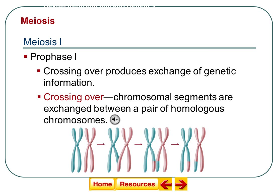 Crossing over produces exchange of genetic information.