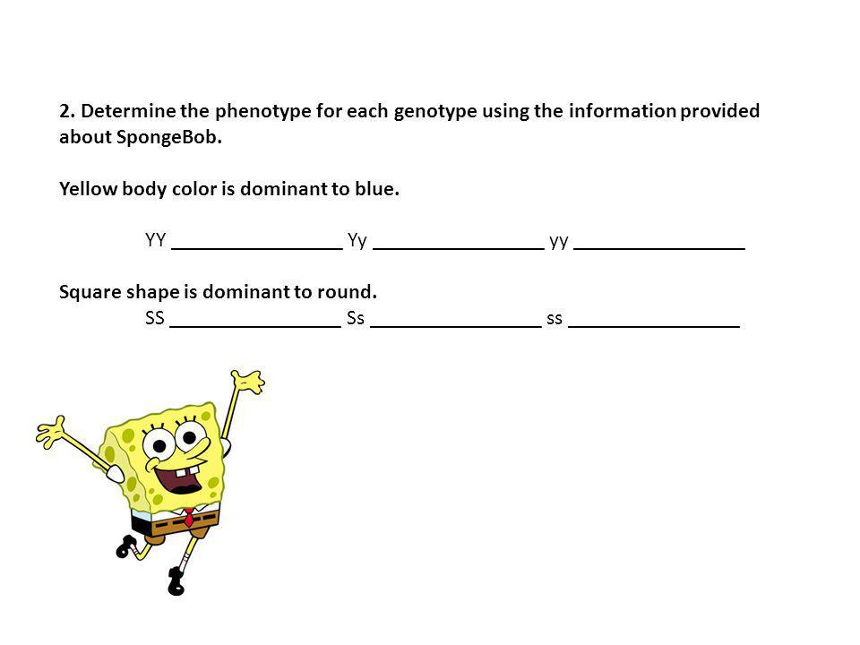 2. Determine the phenotype for each genotype using the information provided about SpongeBob.