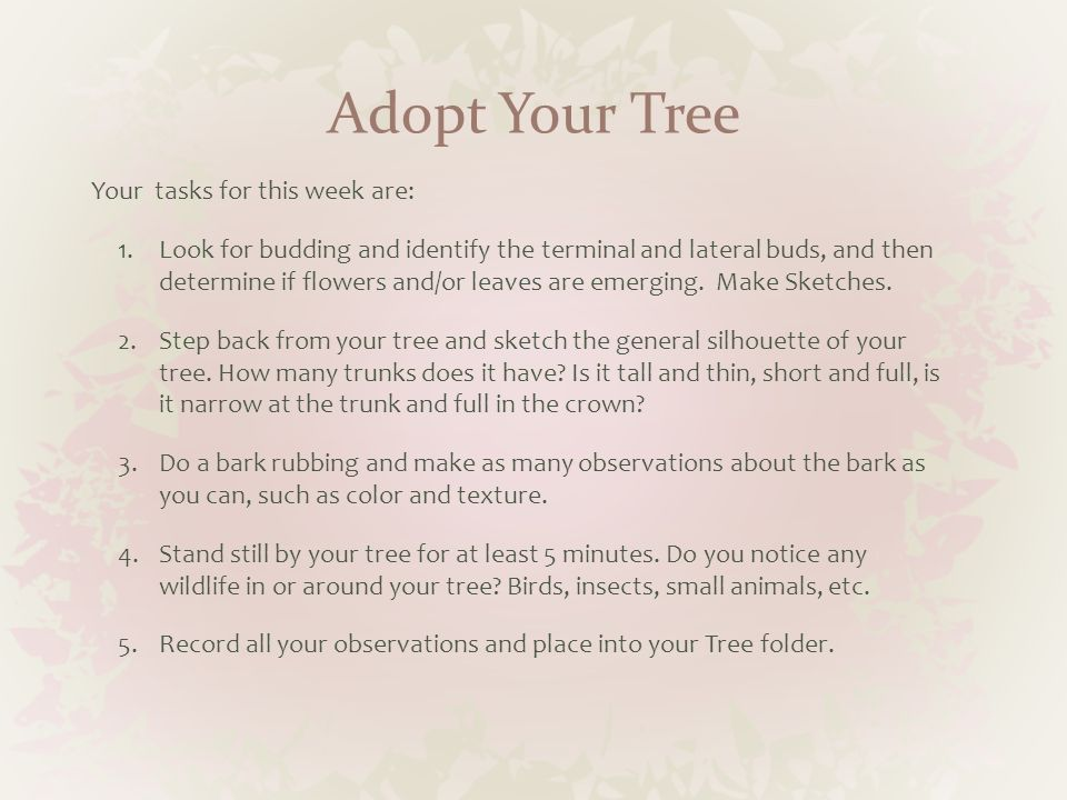 Adopt Your Tree Your tasks for this week are:
