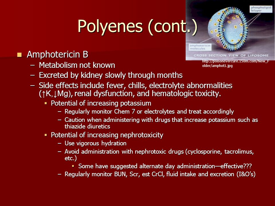 Polyenes (cont.) Amphotericin B Metabolism not known