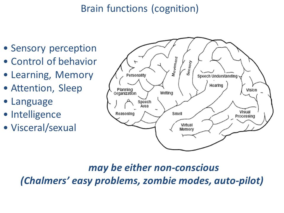 Brain functions (cognition)