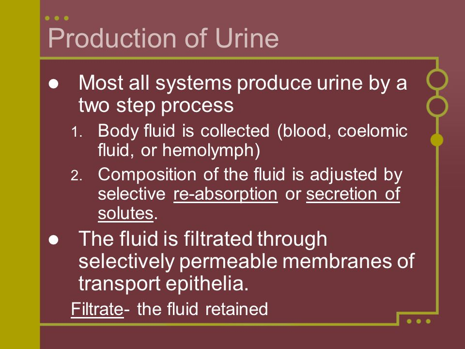 Production of Urine Most all systems produce urine by a two step process. Body fluid is collected (blood, coelomic fluid, or hemolymph)