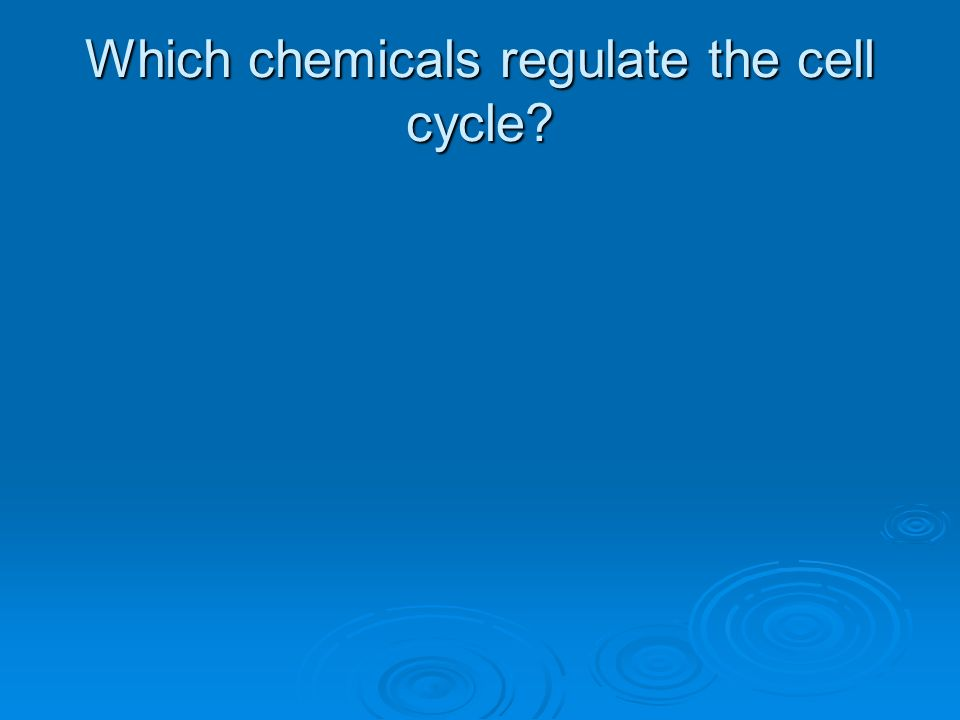 Which chemicals regulate the cell cycle