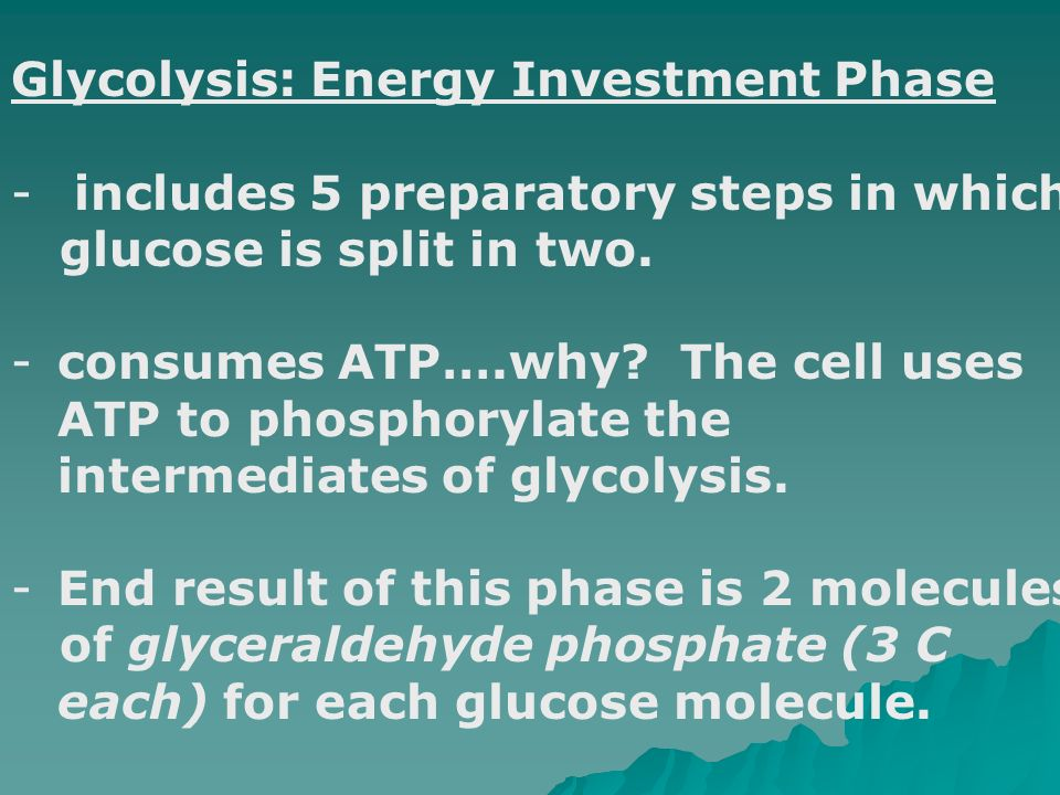 Glycolysis: Energy Investment Phase