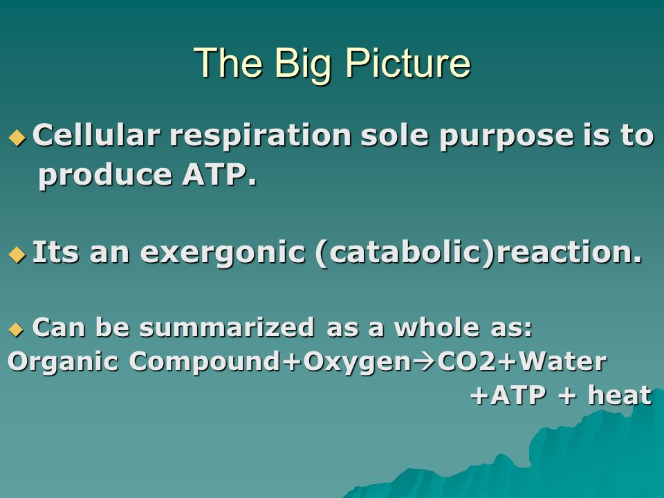 The Big Picture Cellular respiration sole purpose is to produce ATP.
