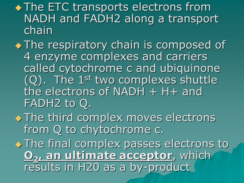 The ETC transports electrons from NADH and FADH2 along a transport chain
