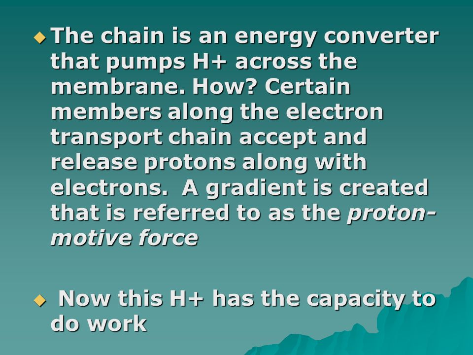 The chain is an energy converter that pumps H+ across the membrane. How Certain members along the electron transport chain accept and release protons along with electrons. A gradient is created that is referred to as the proton-motive force