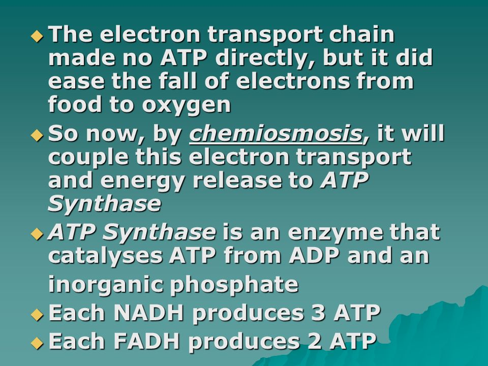 The electron transport chain made no ATP directly, but it did ease the fall of electrons from food to oxygen
