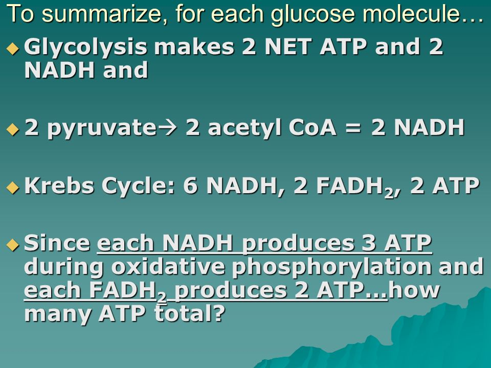 To summarize, for each glucose molecule…