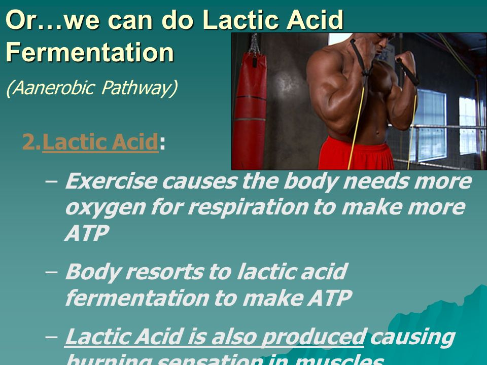 Or…we can do Lactic Acid Fermentation