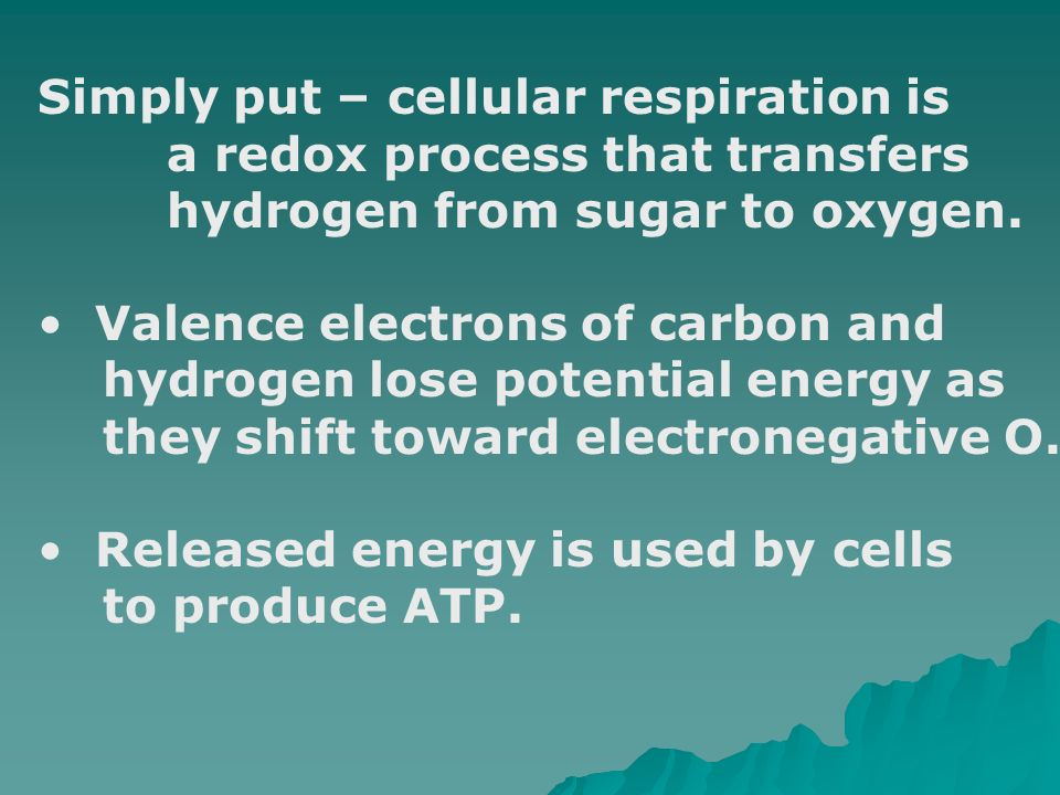 Simply put – cellular respiration is
