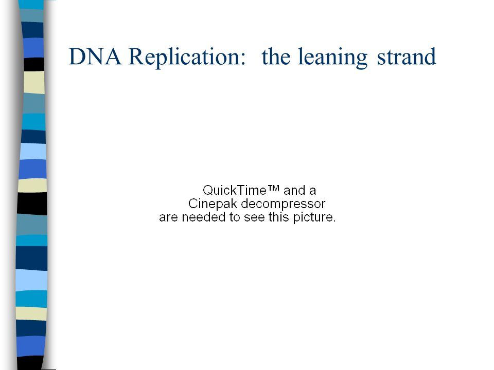 DNA Replication: the leaning strand