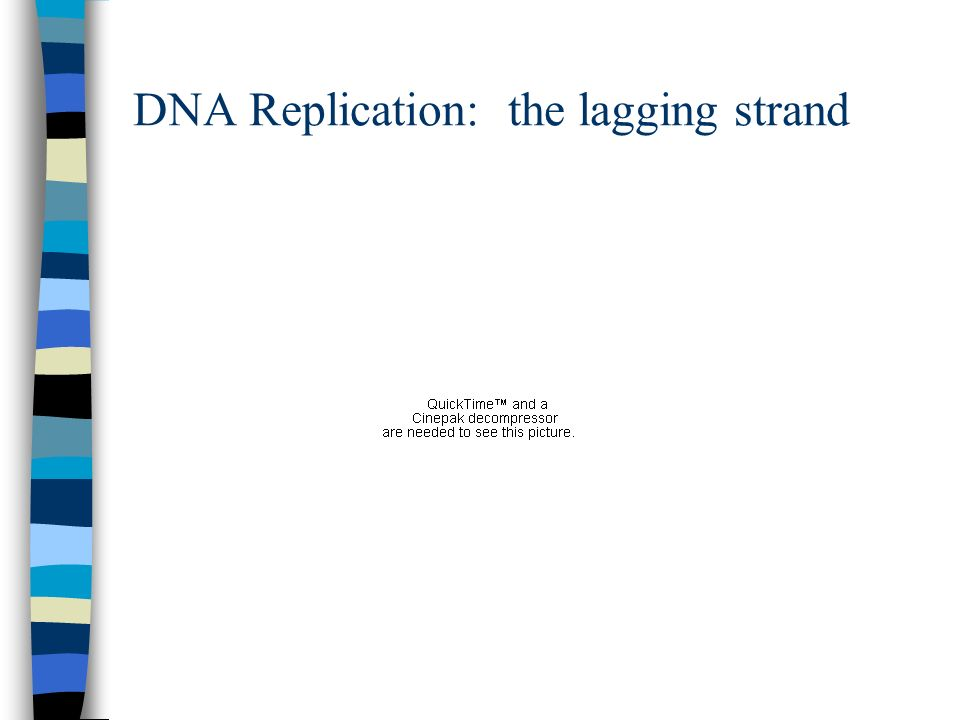 DNA Replication: the lagging strand
