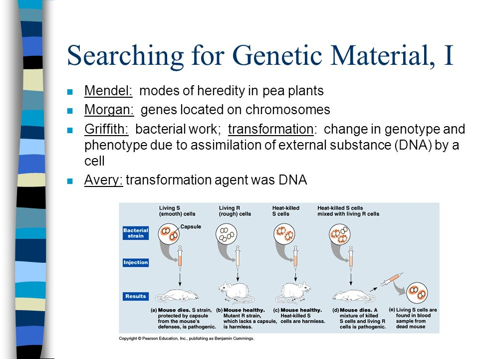 Searching for Genetic Material, I