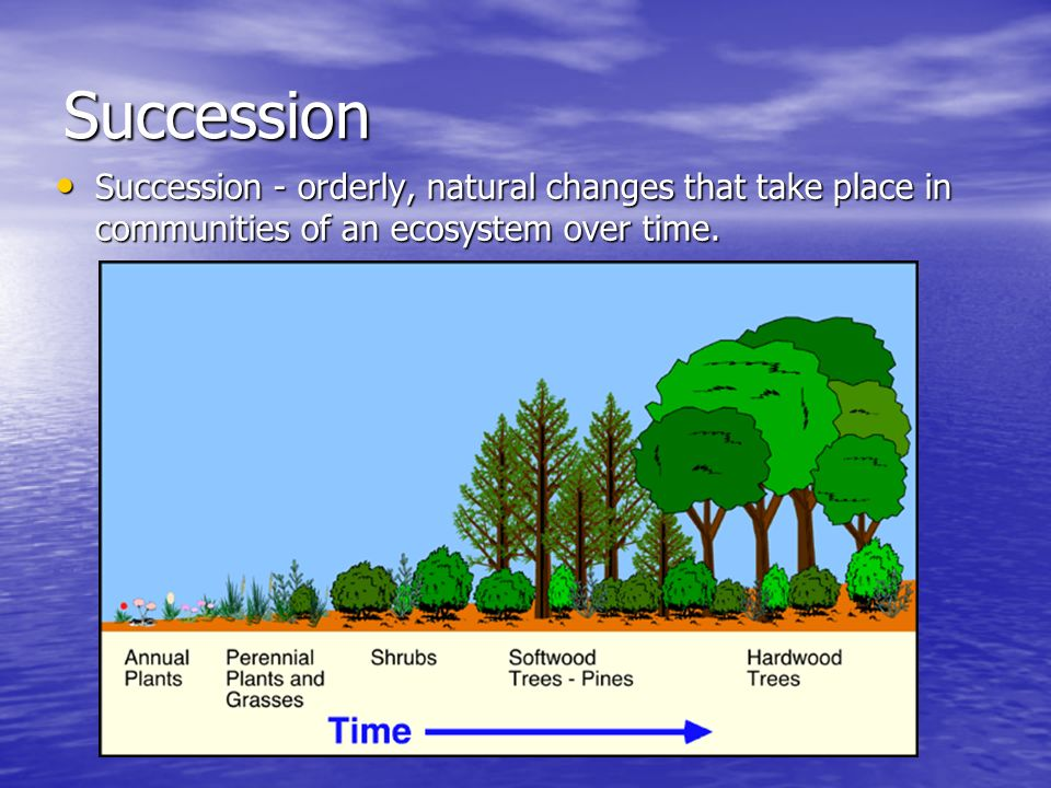 Succession Succession - orderly, natural changes that take place in communities of an ecosystem over time.
