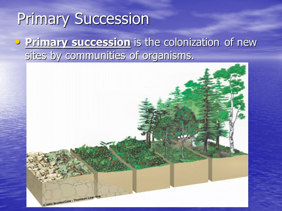 Primary Succession Primary succession is the colonization of new sites by communities of organisms.