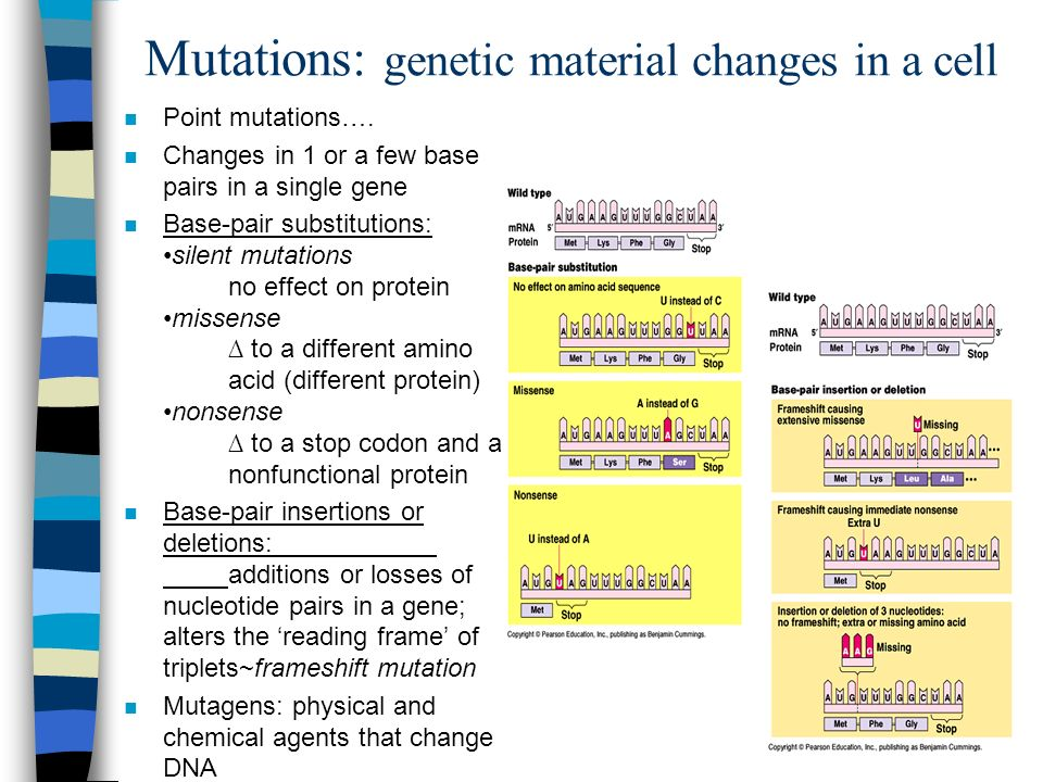 Mutations: genetic material changes in a cell