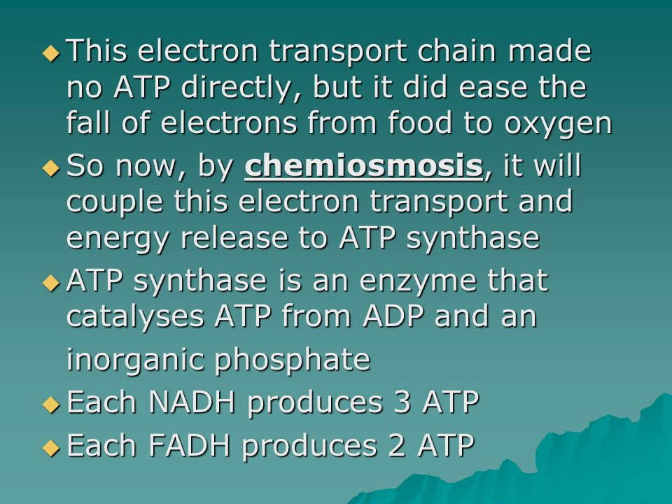 This electron transport chain made no ATP directly, but it did ease the fall of electrons from food to oxygen