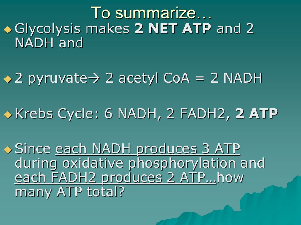 To summarize… Glycolysis makes 2 NET ATP and 2 NADH and