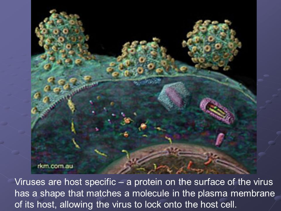 Viruses are host specific – a protein on the surface of the virus