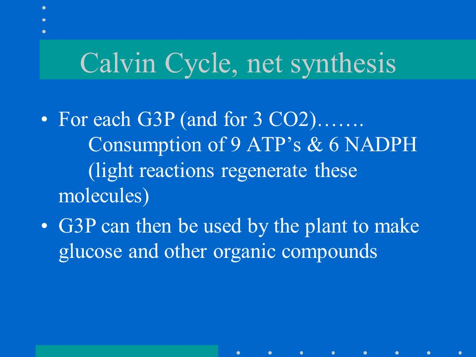 Calvin Cycle, net synthesis