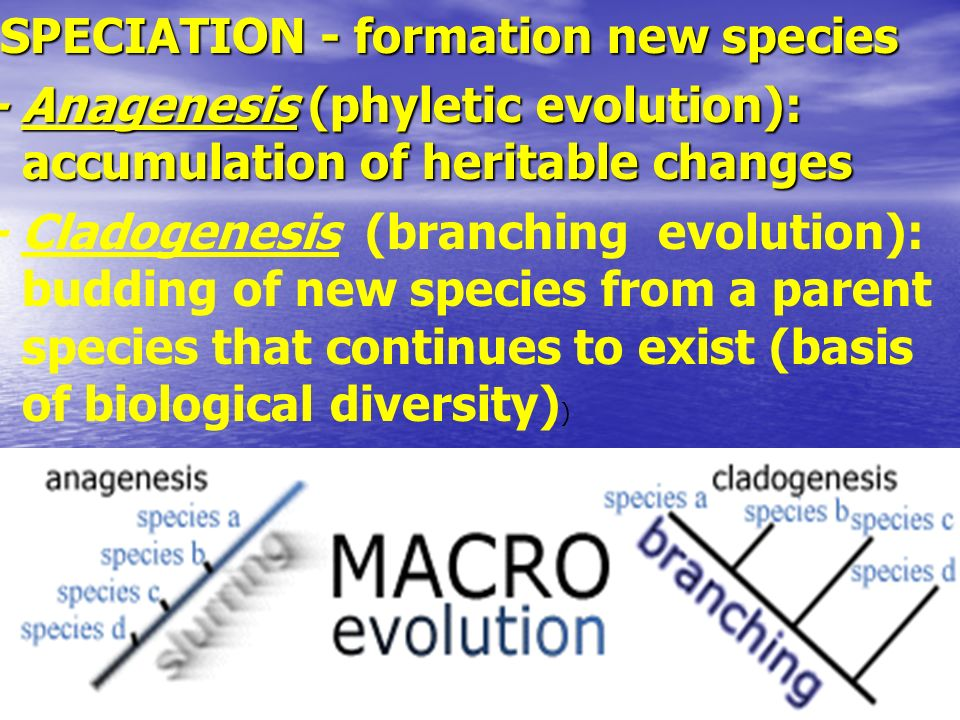 SPECIATION - formation new species