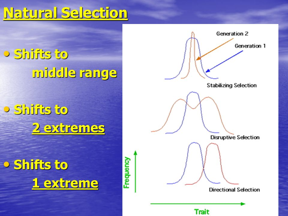 Natural Selection Shifts to middle range 2 extremes 1 extreme