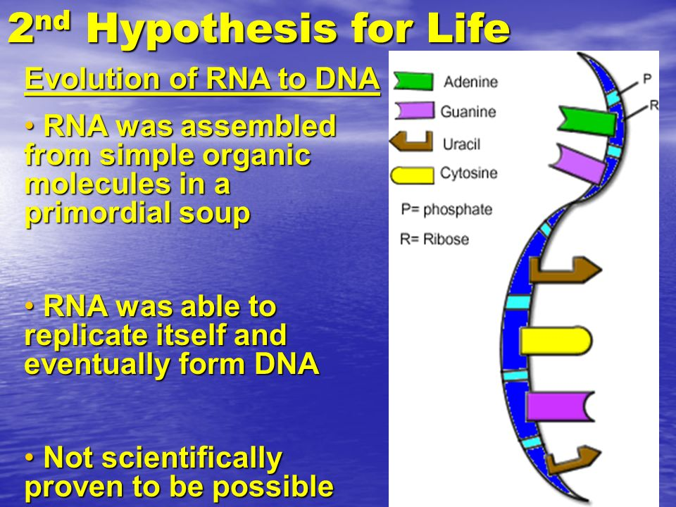 2nd Hypothesis for Life Evolution of RNA to DNA