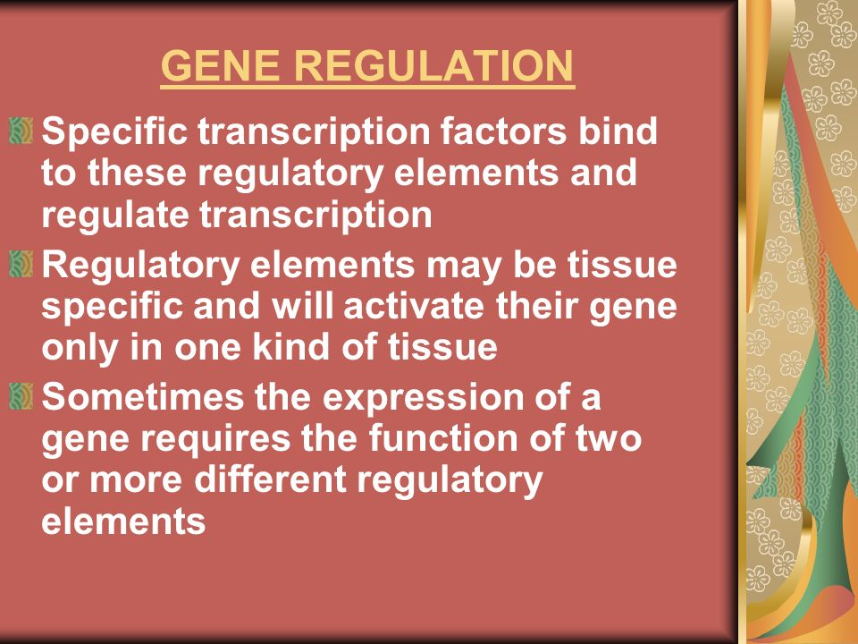 GENE REGULATION Specific transcription factors bind to these regulatory elements and regulate transcription.