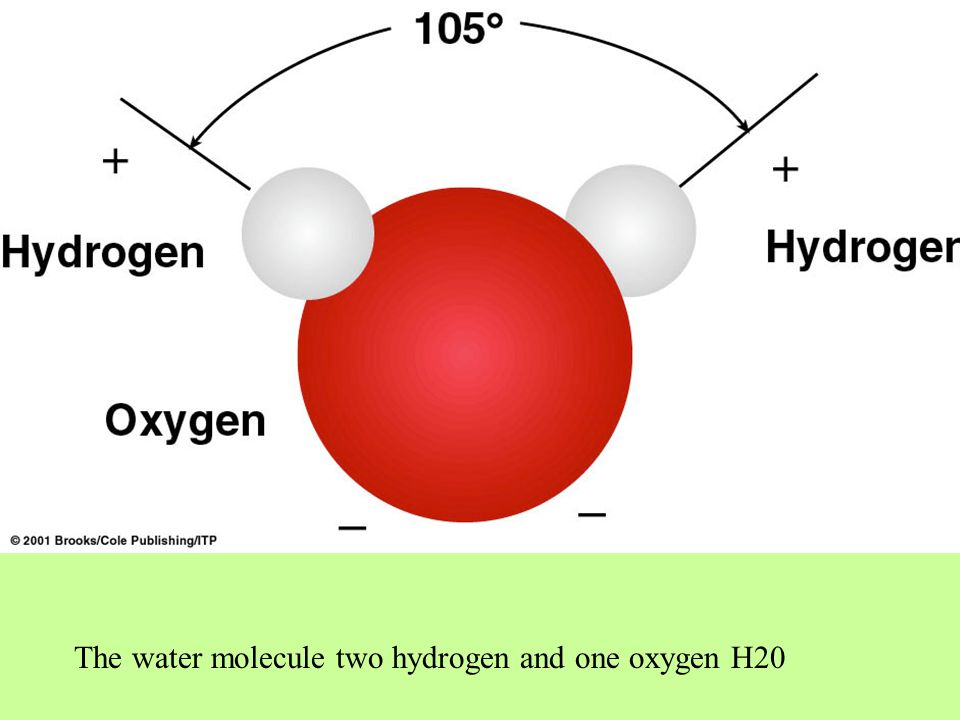 The water molecule two hydrogen and one oxygen H20