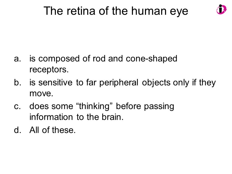 The retina of the human eye