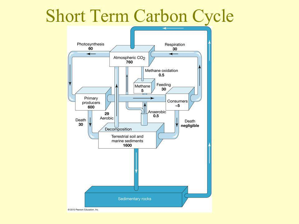 Short Term Carbon Cycle