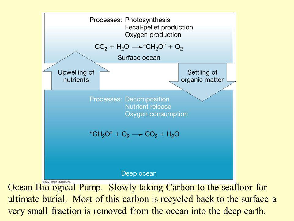 Ocean Biological Pump. Slowly taking Carbon to the seafloor for ultimate burial.