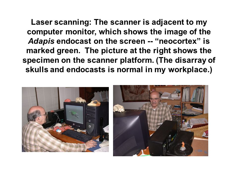 Laser scanning: The scanner is adjacent to my computer monitor, which shows the image of the Adapis endocast on the screen -- neocortex is marked green.