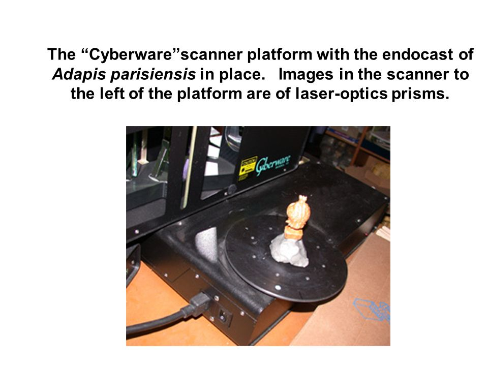 The Cyberware scanner platform with the endocast of Adapis parisiensis in place.