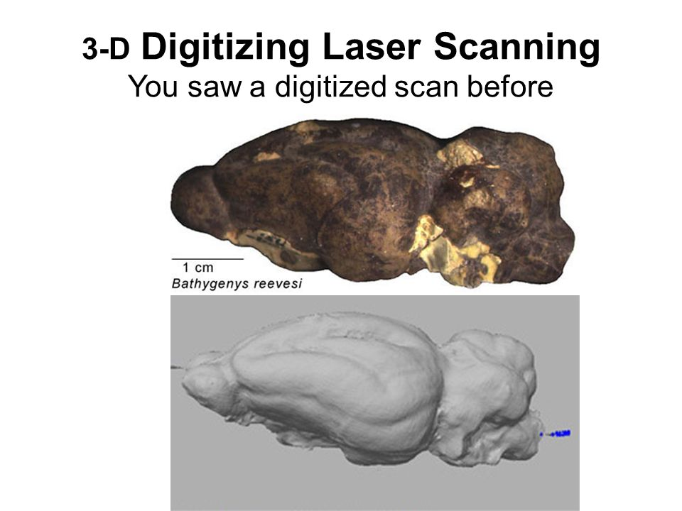 3-D Digitizing Laser Scanning You saw a digitized scan before