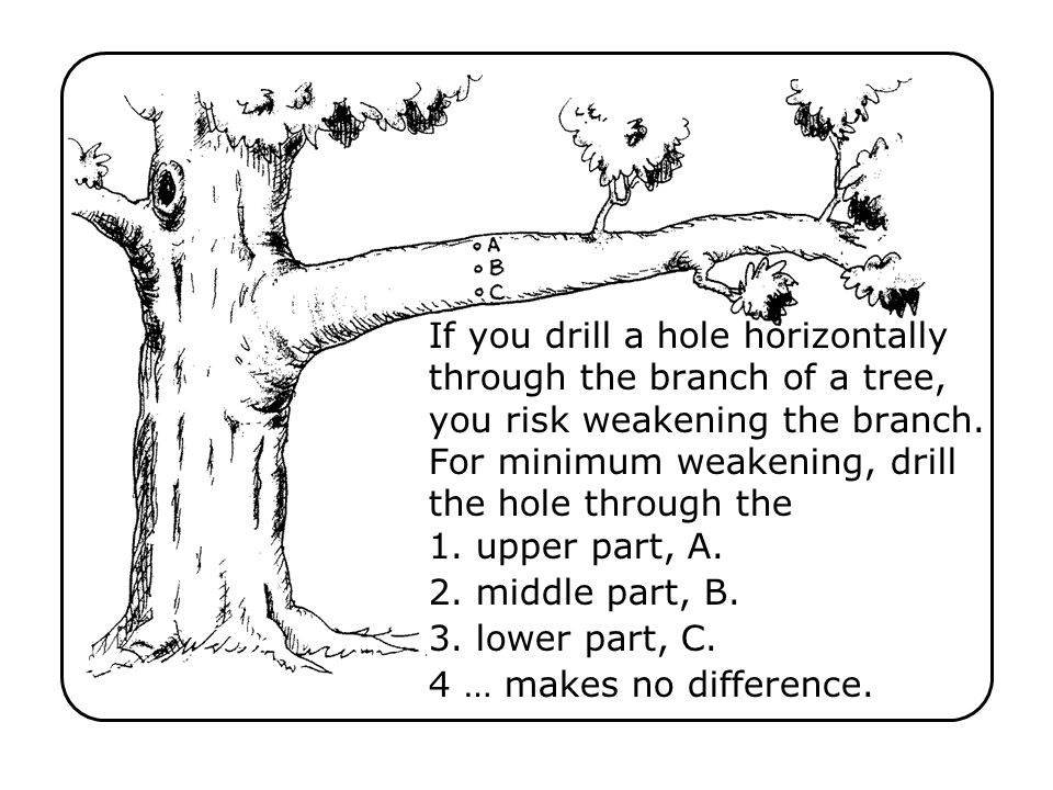 If you drill a hole horizontally through the branch of a tree, you risk weakening the branch. For minimum weakening, drill the hole through the