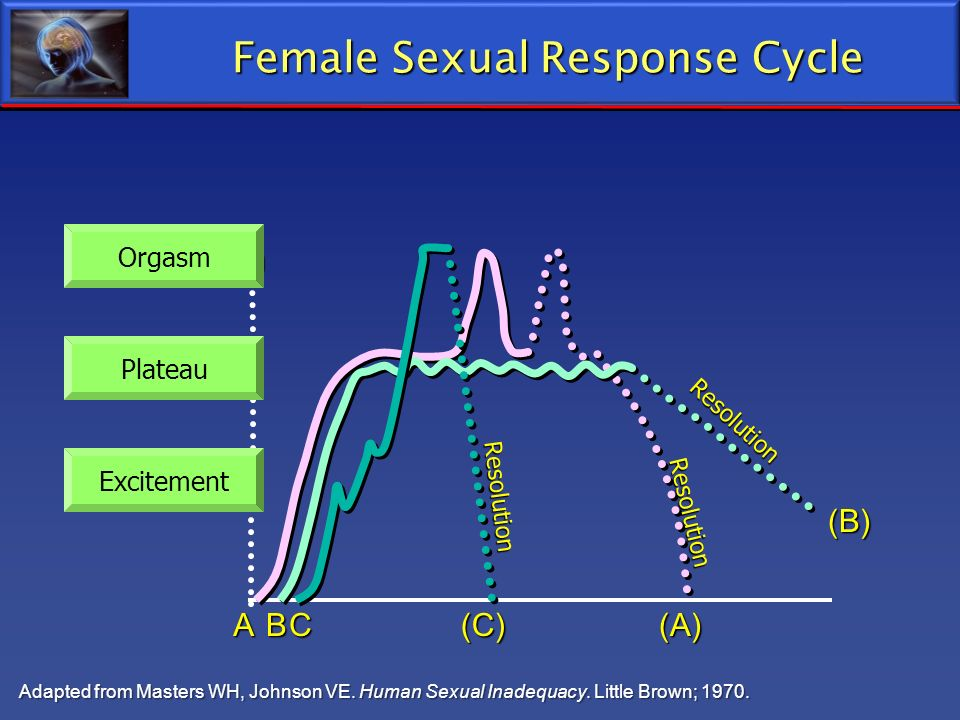 Female sexual response cycle masters and johnson