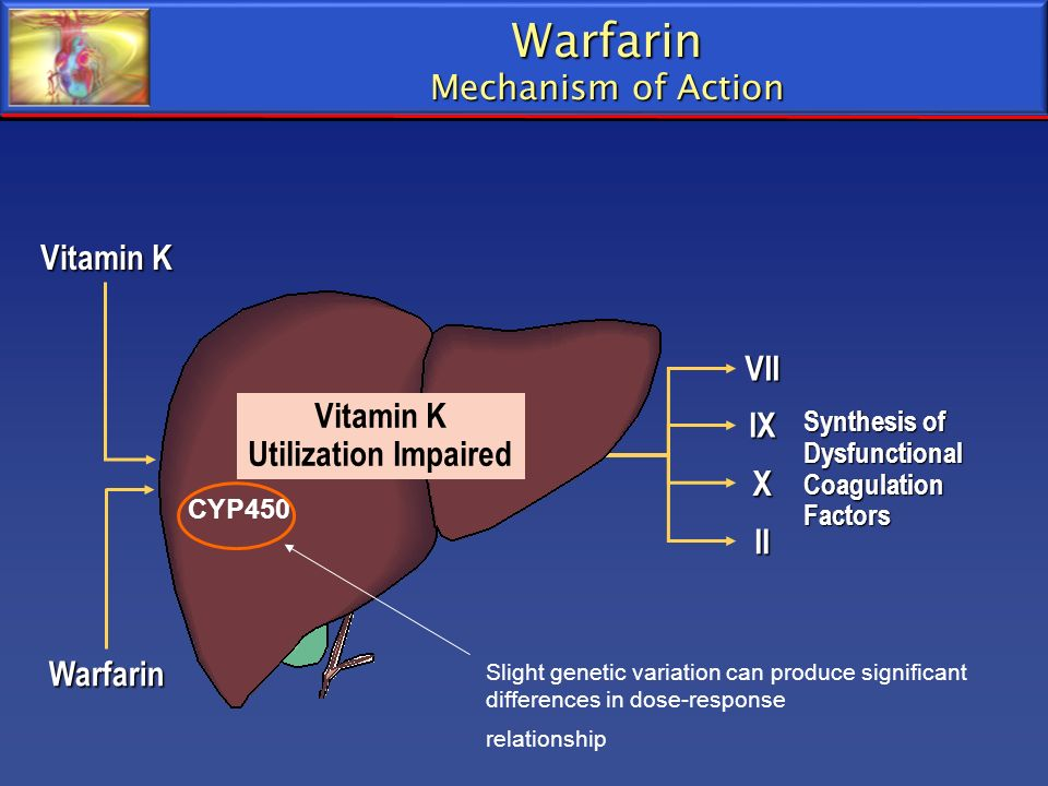 Warfarin Mechanism of Action