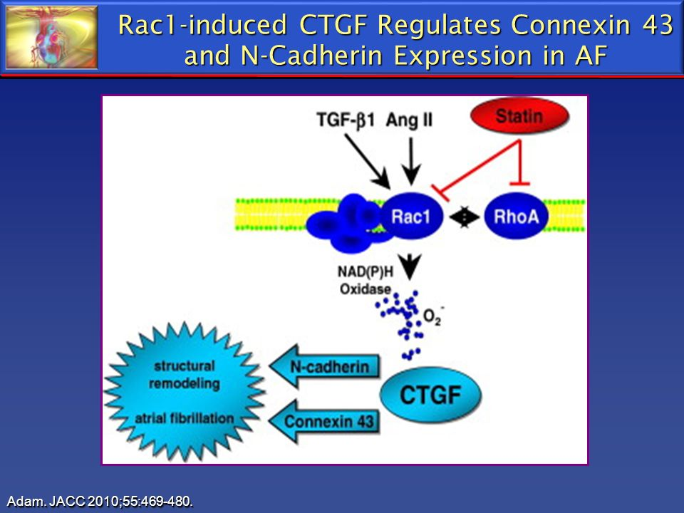 Rac1-induced CTGF Regulates Connexin 43 and N-Cadherin Expression in AF