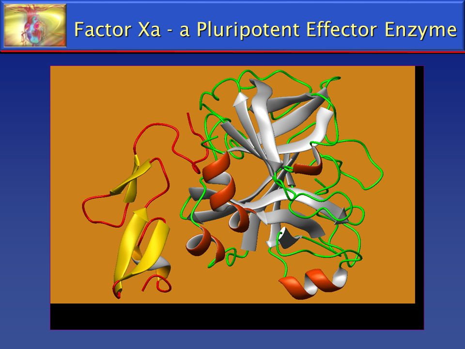 Factor Xa - a Pluripotent Effector Enzyme